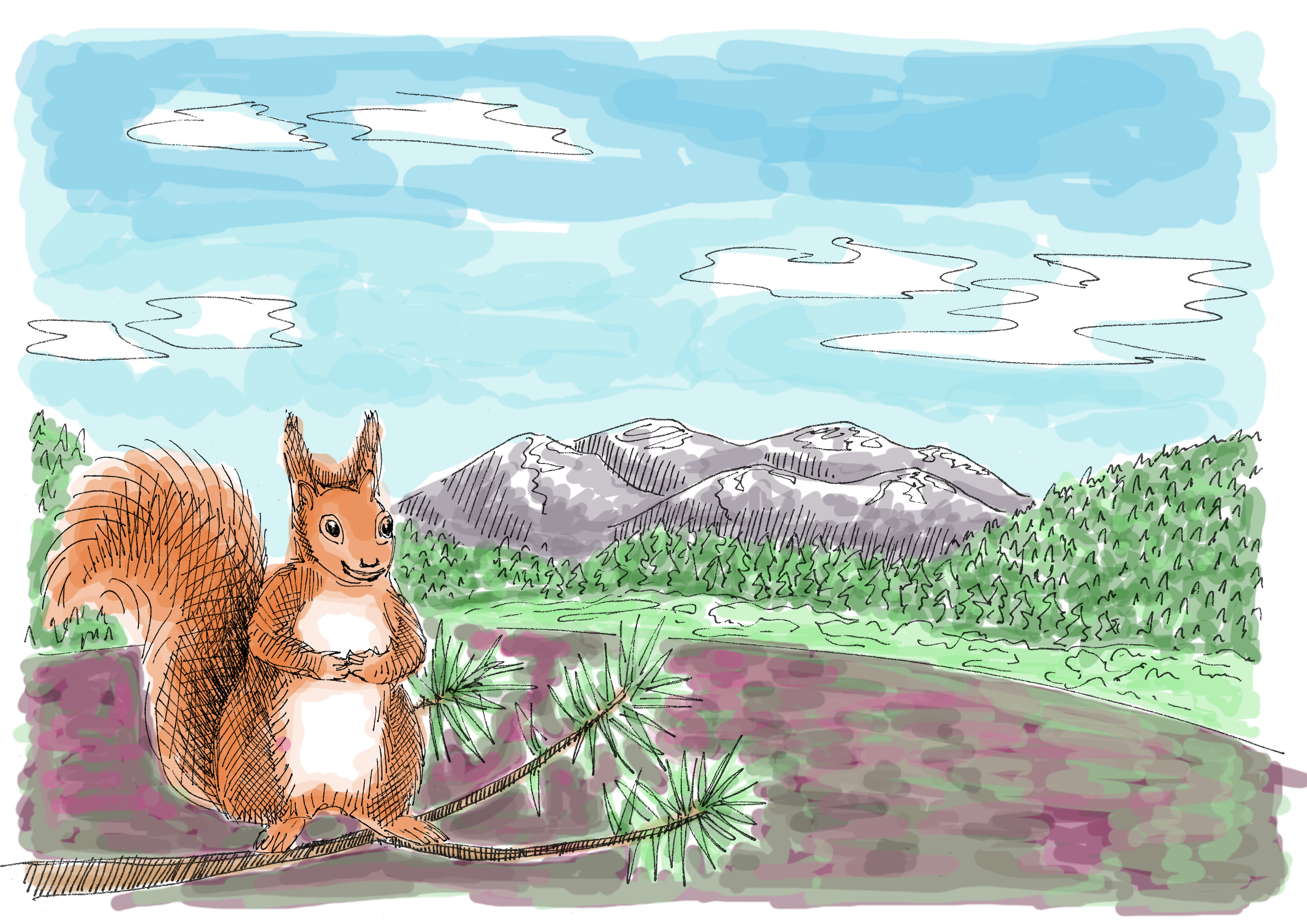 SquirrelForrest_Colour