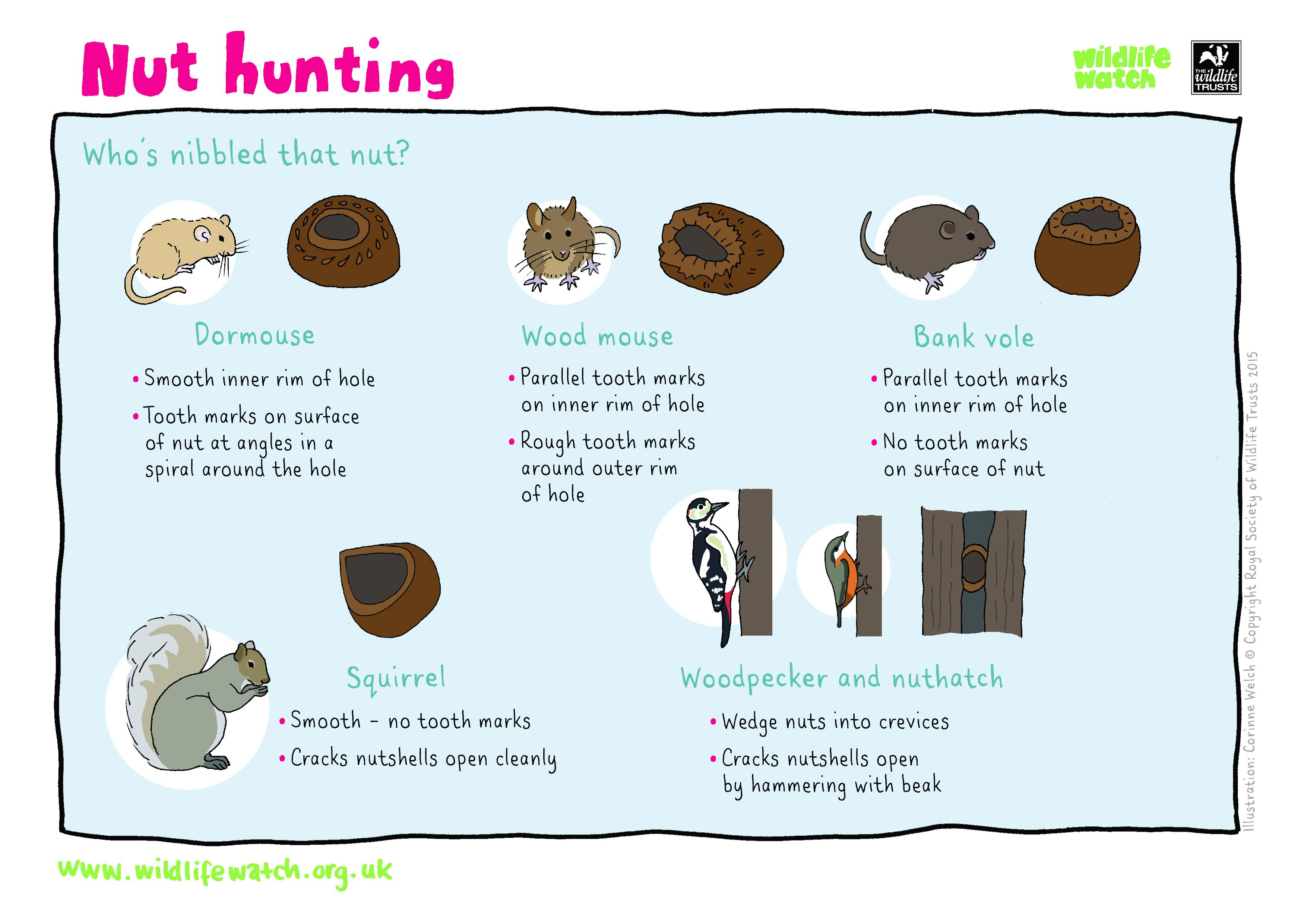 NUT-HUNTING